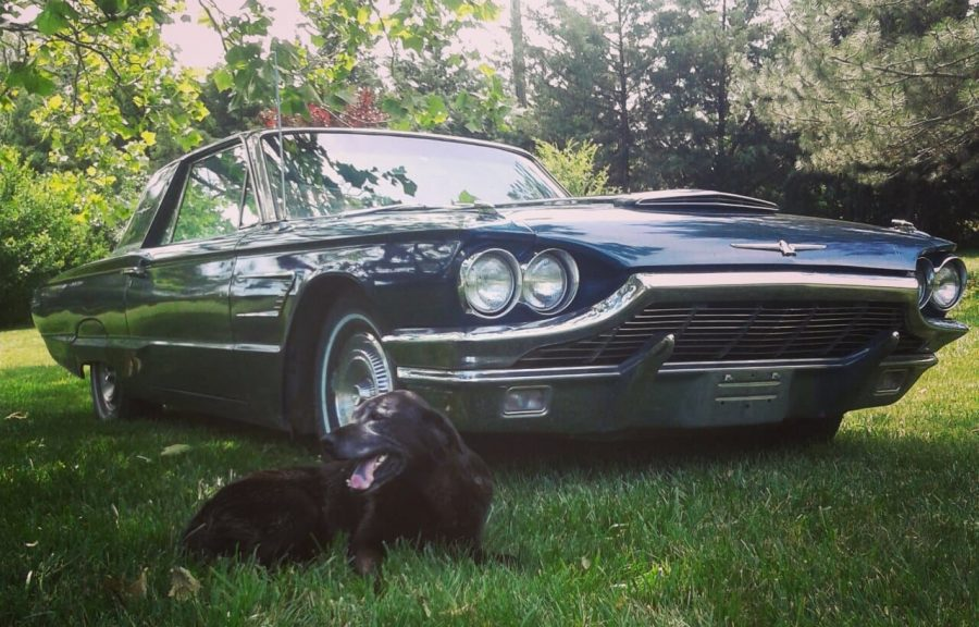 With his dog posing in front, senior Elijah Edwards captures a photo of his 1965 Ford Thunderbird.